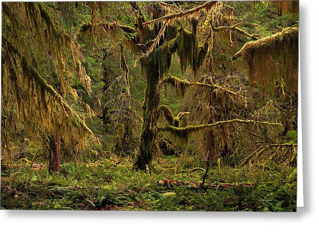 Rain Forest Texture Greeting Card