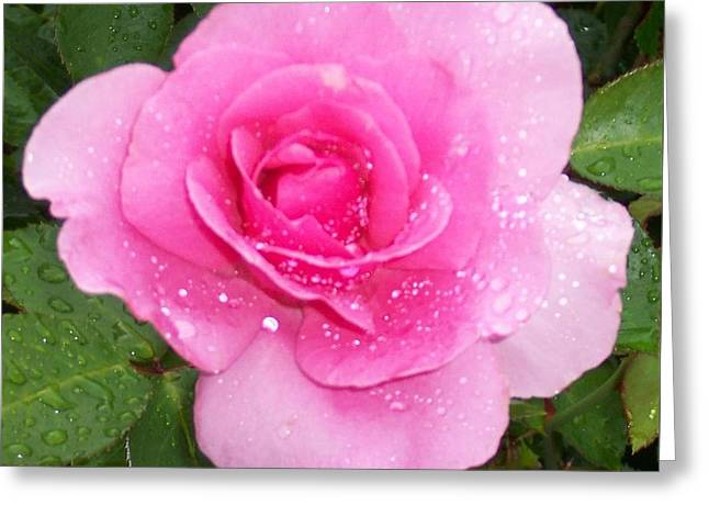 Rain Kissed Rose Greeting Card by Catherine Gagne