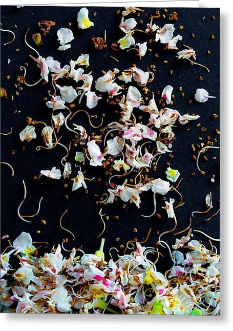 Rain Of Petals Greeting Card by Edgar Laureano