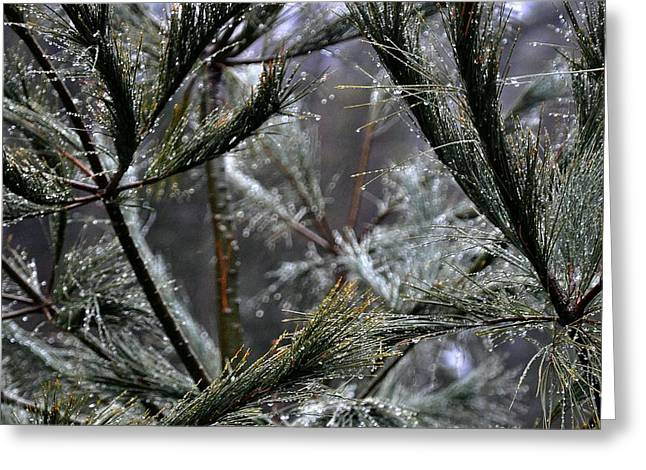 Rain On Pine Needles Greeting Card