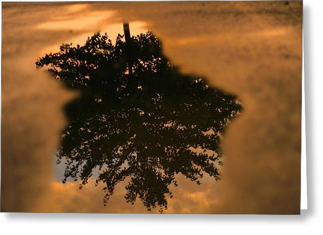 Rain Puddle Reflection At Sunset Greeting Card