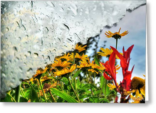 Rain Rain Go Away... Greeting Card