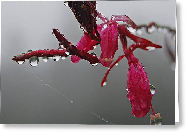 Rain Weaver Greeting Card