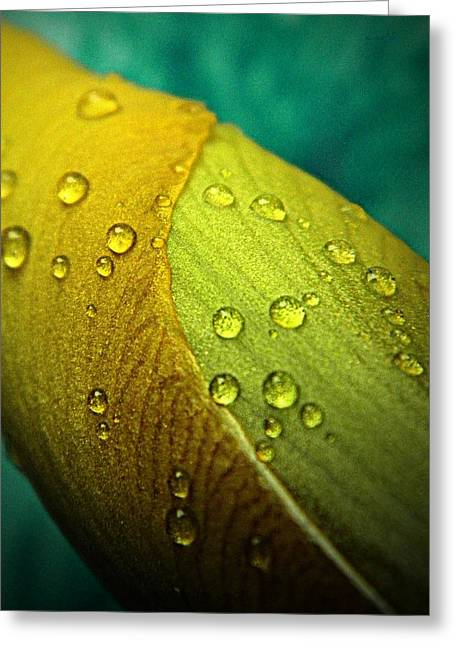 Rain Wrapped Greeting Card