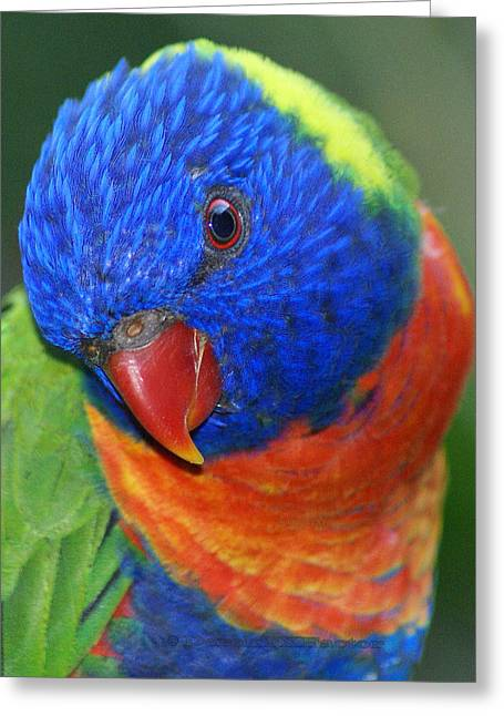 Rainbow Bird - Lorikeet Greeting Card by DerekTXFactor Creative