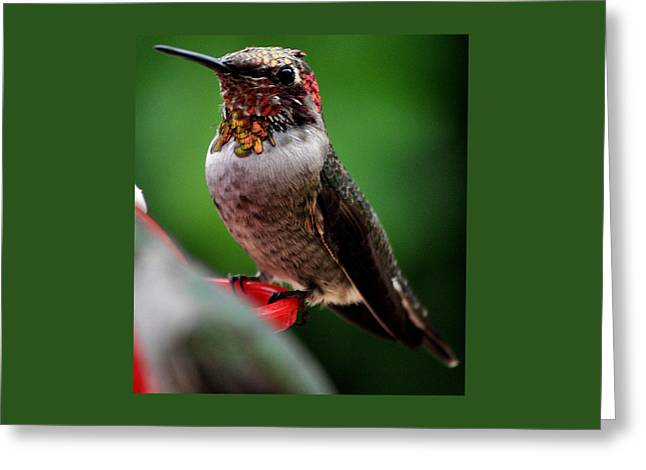Greeting Card featuring the photograph Rainbow Colored Male Anna by Jay Milo