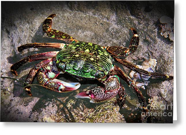 Rainbow Crab Greeting Card by Mariola Bitner
