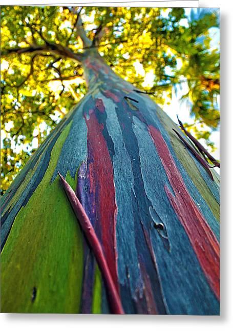 Rainbow Eucalyptus Greeting Card by Mitch Cat