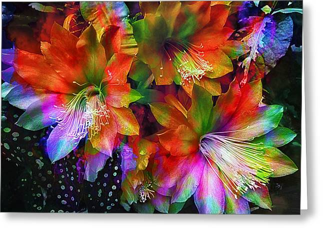Rainbow Flowers Greeting Card by Daniel Hagerman