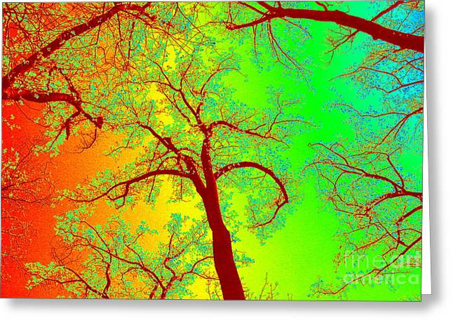 Rainbow Forest Greeting Card by Patti Whitten
