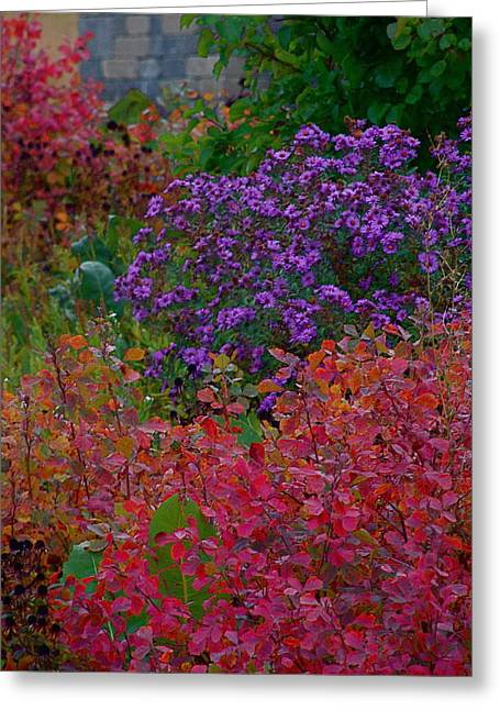 Rainbow Garden Greeting Card by Tim Good
