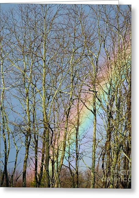 Greeting Card featuring the photograph Rainbow Hiding Behind The Trees by Kristen Fox