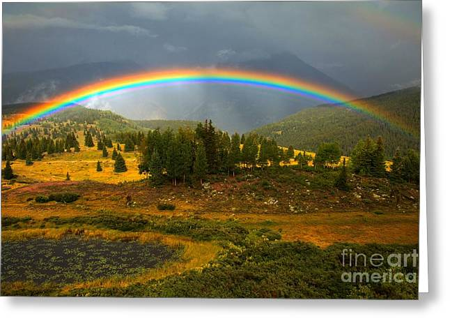 Rainbow In The Forest Greeting Card by Adam Jewell