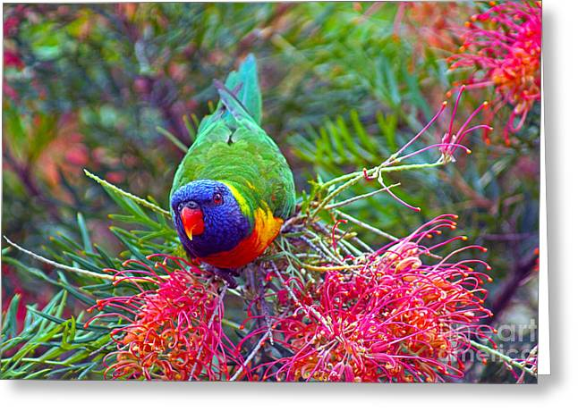 Rainbow Lorikeet I Greeting Card