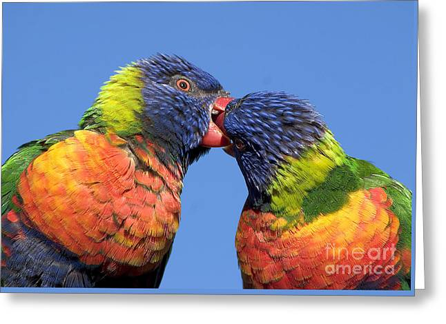 Rainbow Lorikeets Greeting Card by Steven Ralser