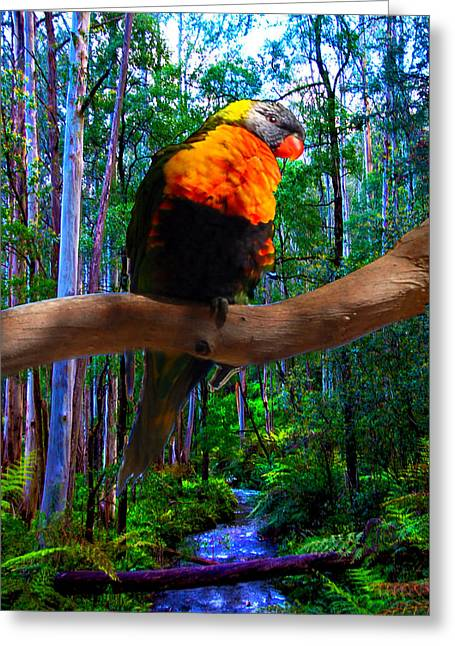 Rainbow Of The Forest Greeting Card