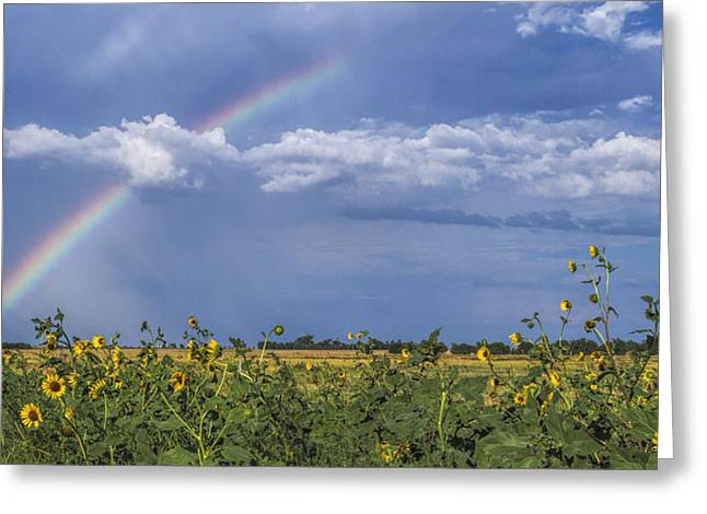 Rainbow Over Sunflowers Greeting Card