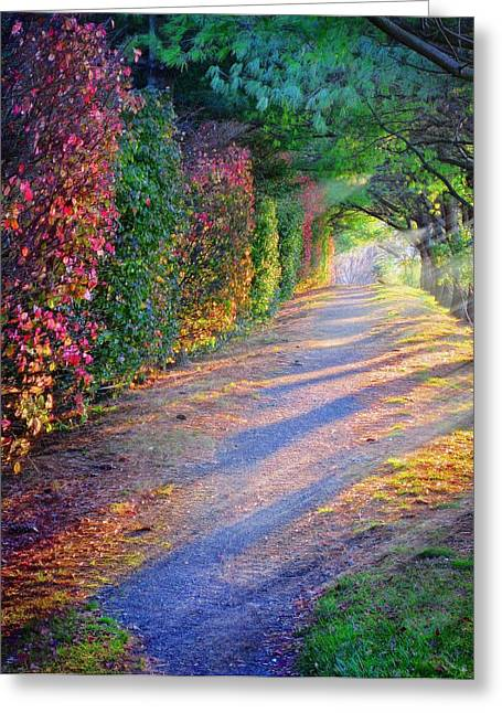 Rainbow Path Greeting Card by William Schmid