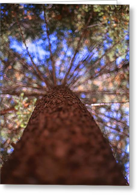 Greeting Card featuring the photograph Rainbow Pine by Aaron Aldrich
