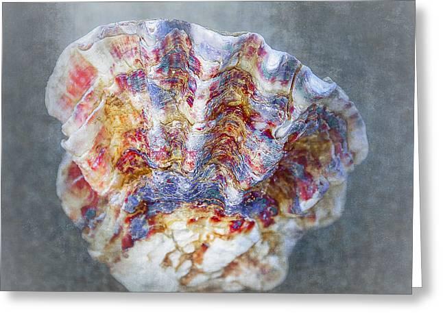 Rainbow Shell Greeting Card by Svetlana Sewell