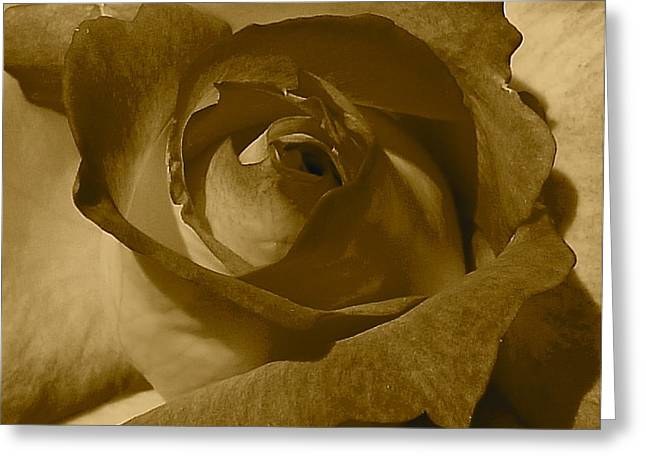 Rainbow Sorbet Rose In Sepia Greeting Card by Denise Mazzocco