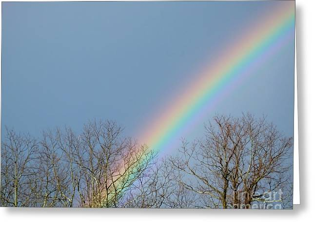Greeting Card featuring the photograph Rainbow Through The Tree Tops by Kristen Fox