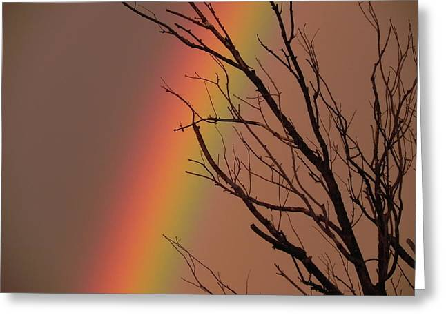 Rainbow Tree Greeting Card