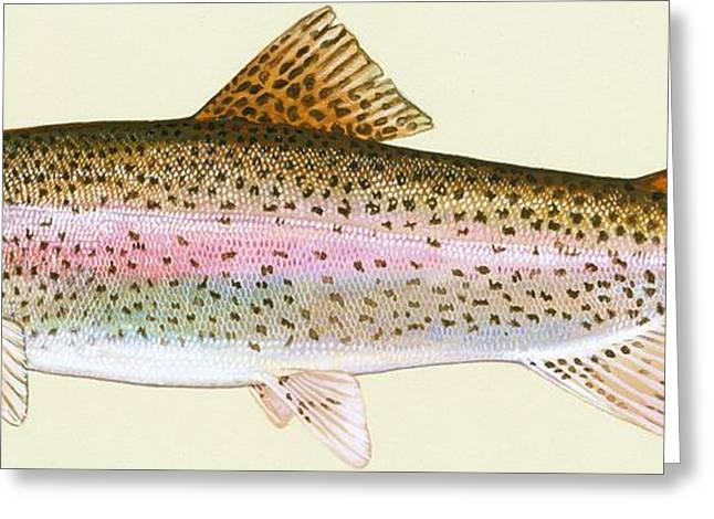 Rainbow Trout Greeting Card by Pg Reproductions