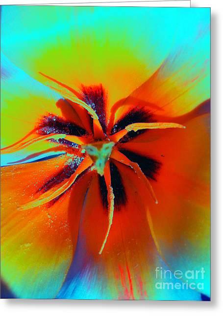 Rainbow Tulip Greeting Card by Dasha Masha