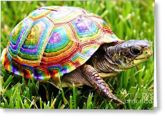 Holiday Rainbow Shell Turtle Clip Art at Clker.com - vector clip ...