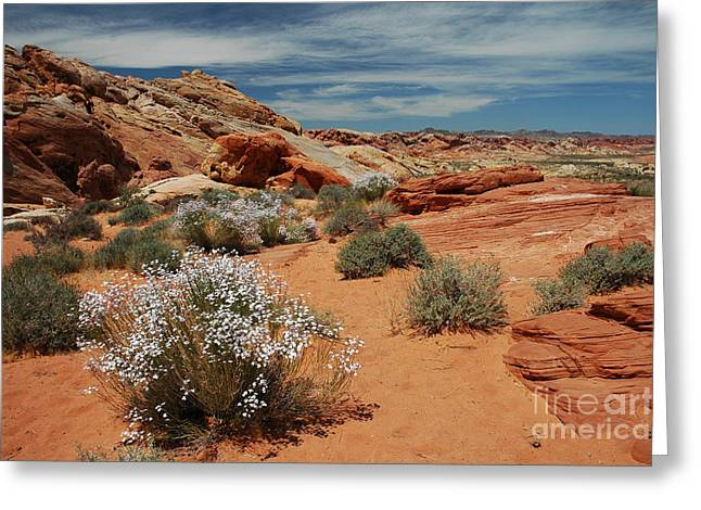 601p Rainbow Vista In The Valley Of Fire Greeting Card