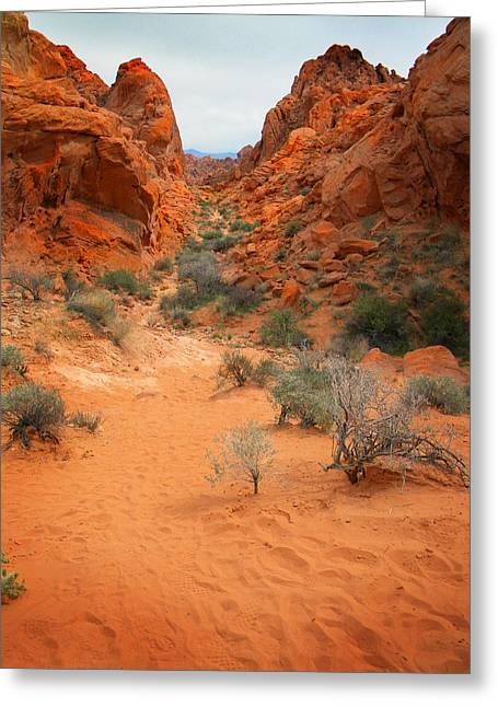Rainbow Vista Trail Valley Of Fire Greeting Card by Frank Wilson