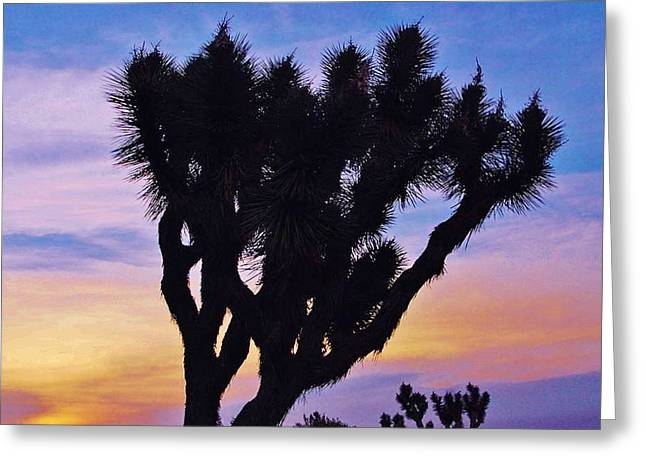 Greeting Card featuring the photograph Rainbow Yucca by Angela J Wright