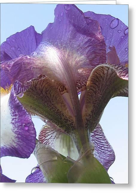 Raindrop Iris Greeting Card