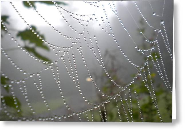 Greeting Card featuring the photograph Raindrop Pearls In Fog by Diannah Lynch