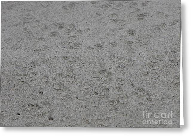 Raindrops In Sand Greeting Card by Gayle Melges