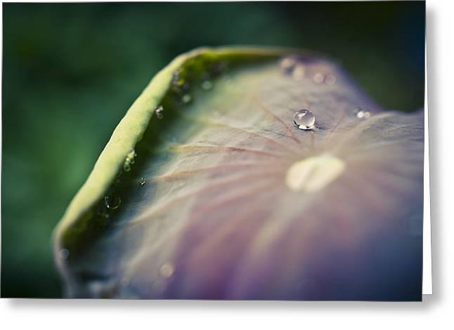 Raindrops On A Lotus Leaf Greeting Card by Priya Ghose
