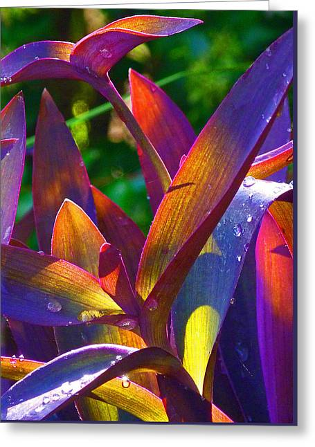 Raindrops On Colored Leaves Greeting Card