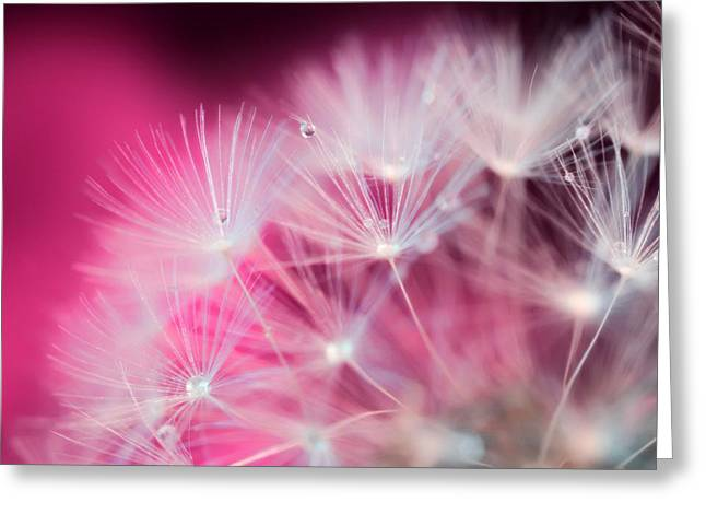 Raindrops On Dandelion Magenta Greeting Card