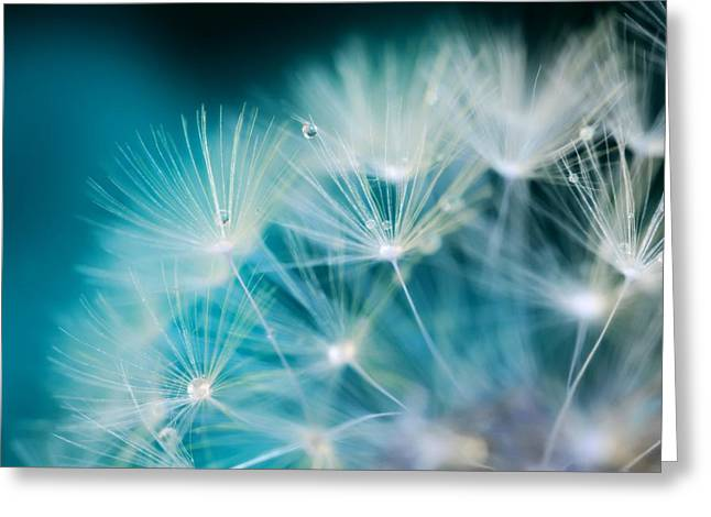 Raindrops On Dandelion Sea Blue Greeting Card by Marianna Mills