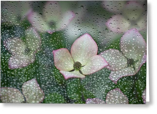 Raindrops On Glass With A View Of Pink Greeting Card by Debra Brash