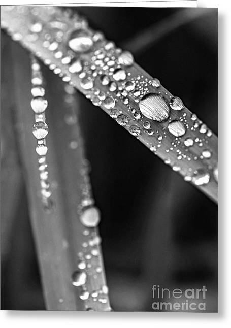 Raindrops On Grass Blades Greeting Card