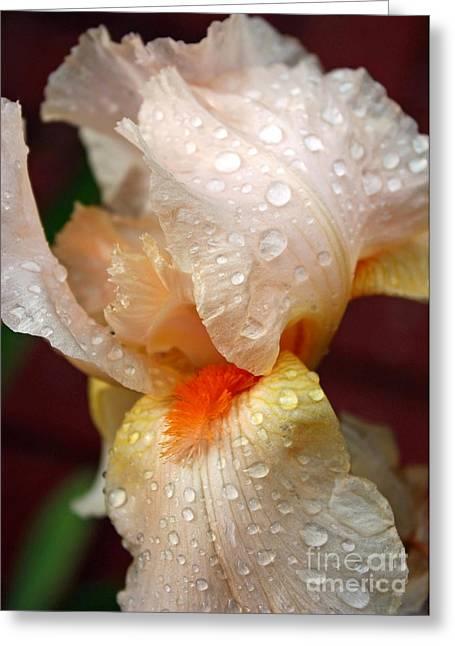 Raindrops On Orange Iris Greeting Card by Carol Groenen