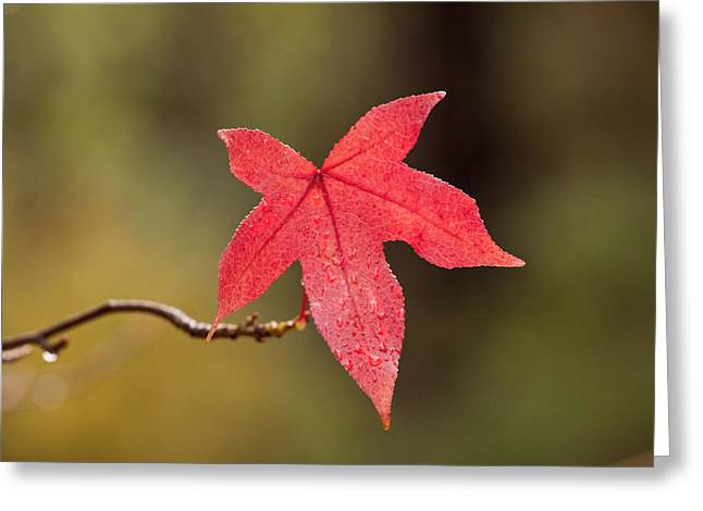 Raindrops On Red Fall Leaf Greeting Card by Michelle Wrighton