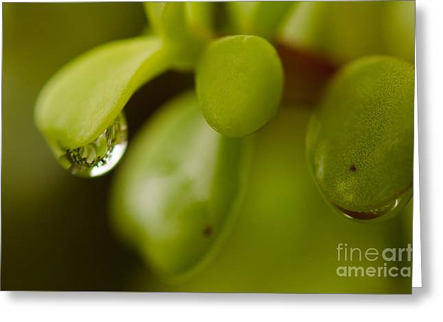 Raindrops V Greeting Card