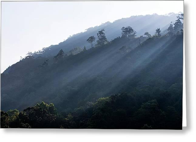 Rainforest At Dawn Greeting Card by K Jayaram