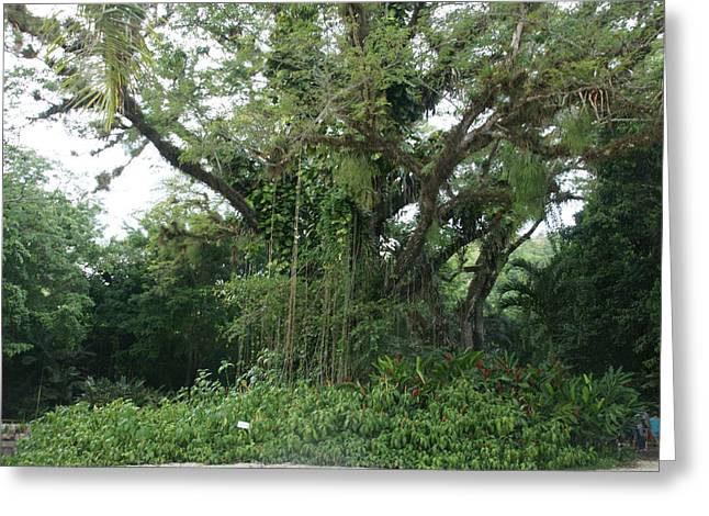 Rainforest At Ys River Greeting Card by Olaf Christian