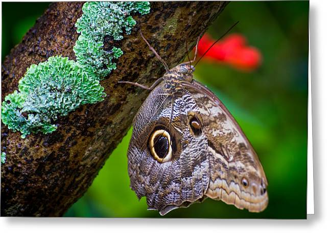 Rainforest Butterfly Greeting Card by Mark Andrew Thomas