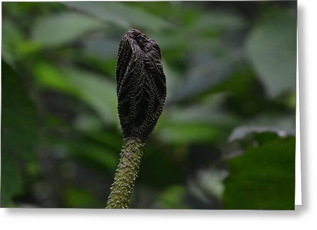 Rainforest Pod Greeting Card by Bill Mock