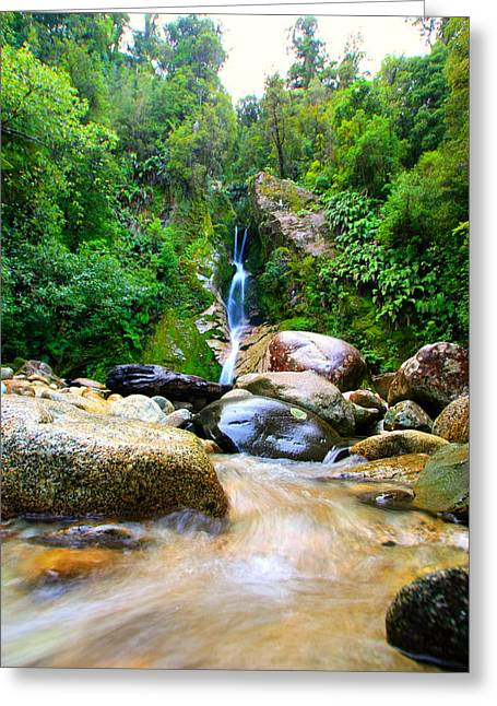 Greeting Card featuring the photograph Rainforest Stream New Zealand by Amanda Stadther